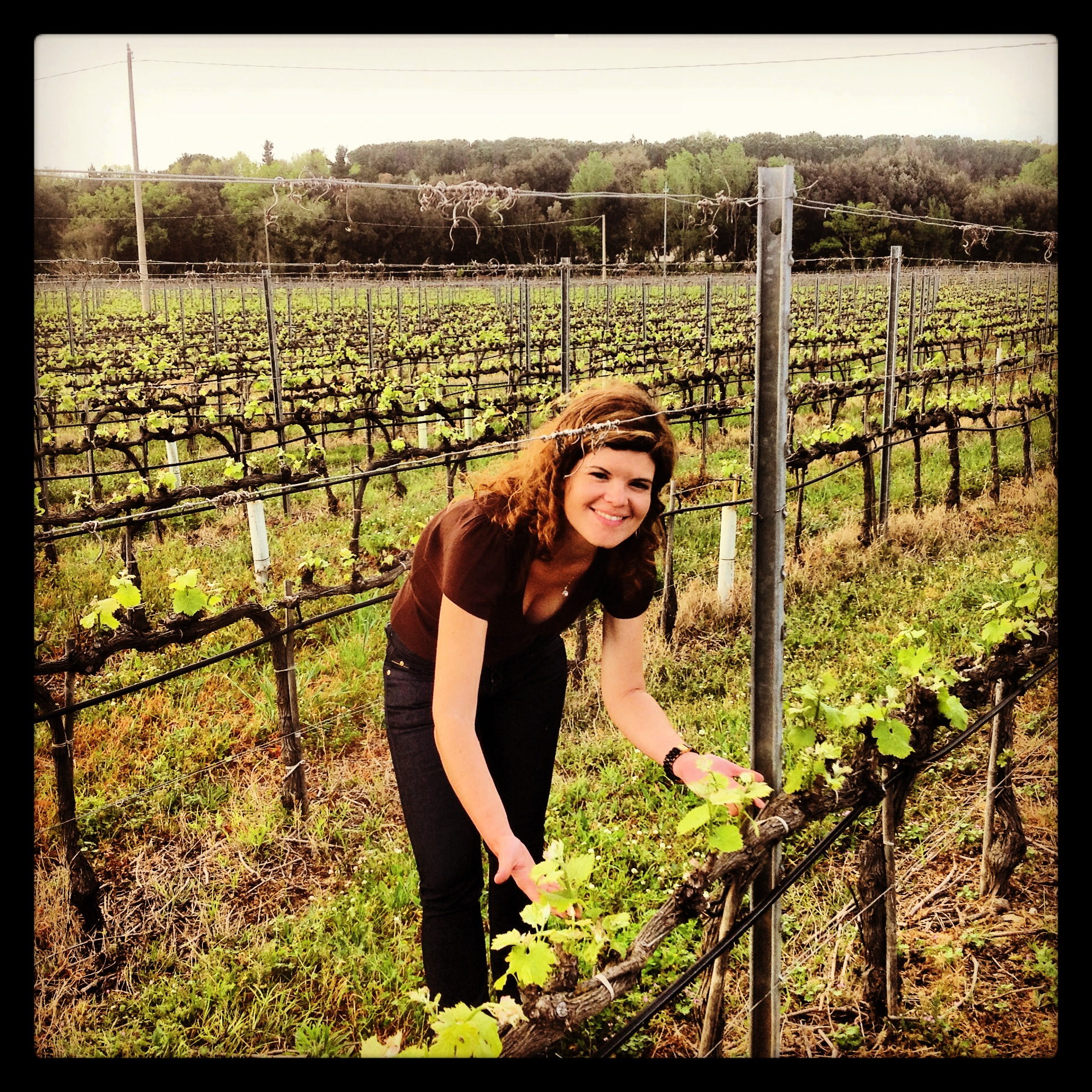 vinhas de Bolgheri DOC