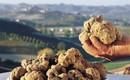 A maior Feira de Trufas Brancas da Toscana é em San Miniato