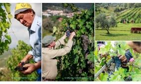 Tour do Chianti Simples – uma tarde ou manhã em meio aos vinhedos da toscana