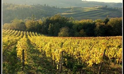 Tour do Chianti Completo – um dia em meio as colinas e vinhos toscanos