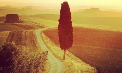O enoturismo na toscana: bons vinhos e lindas paisagens