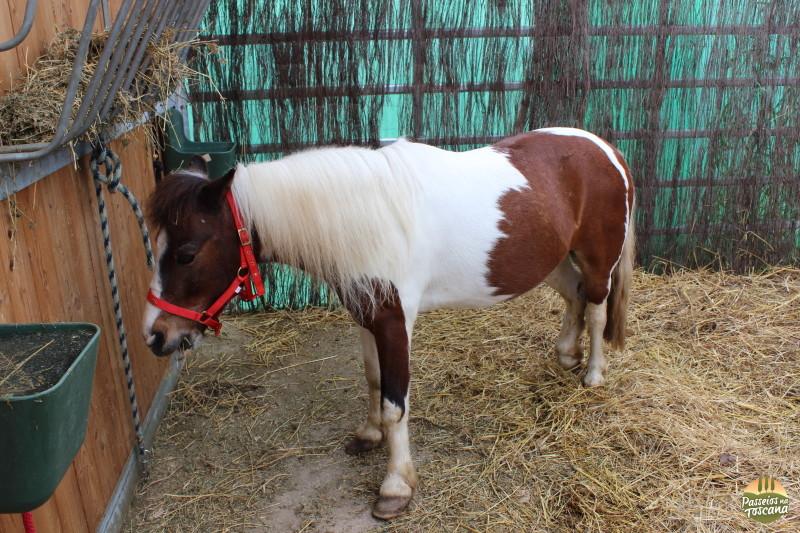 cavallo044-2