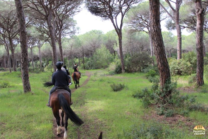 cavallo047