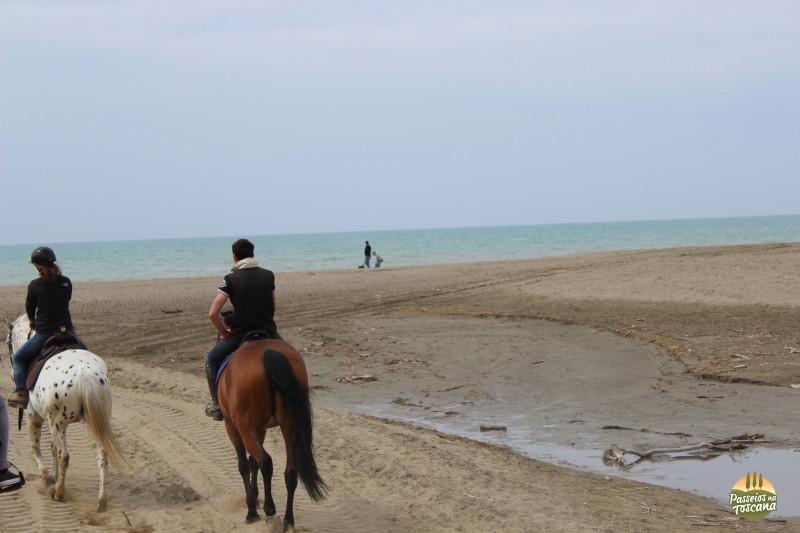 cavallo048