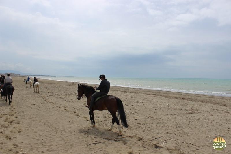 cavallo050