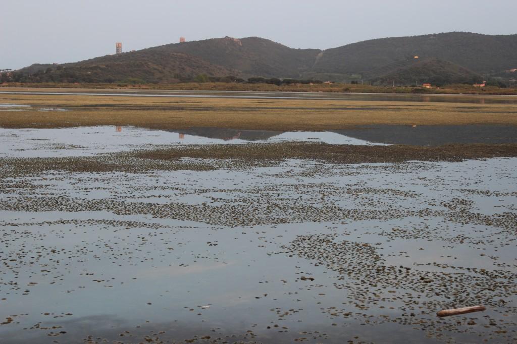 Laguna de Orbetelo