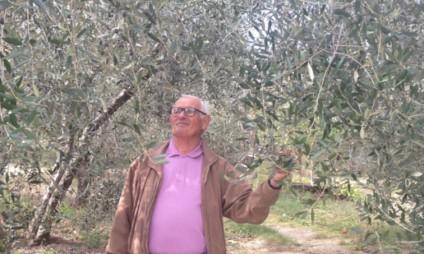 Azeite na Toscana: este ano uma triste notícia!