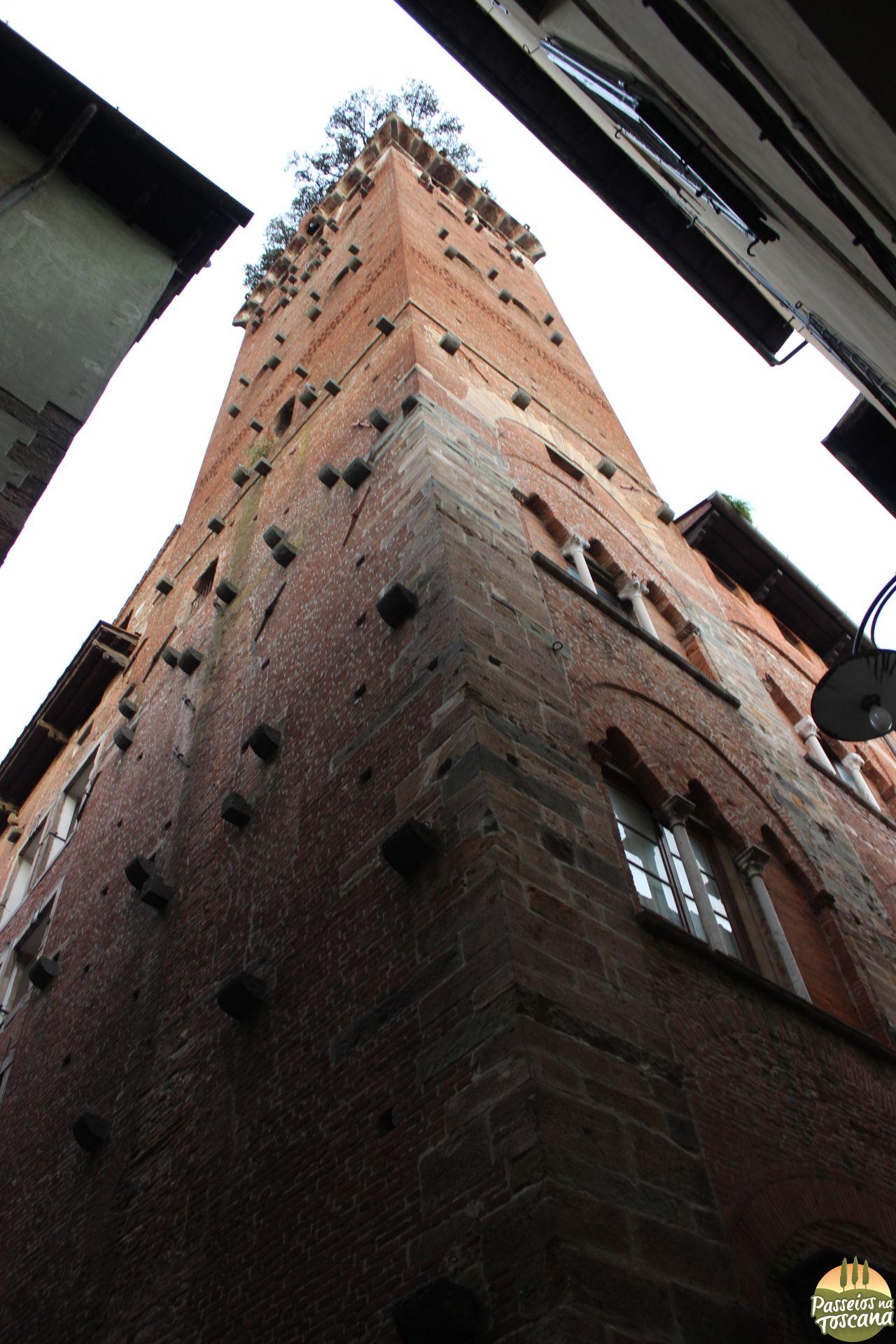 Lucca - torre Guinigi_50