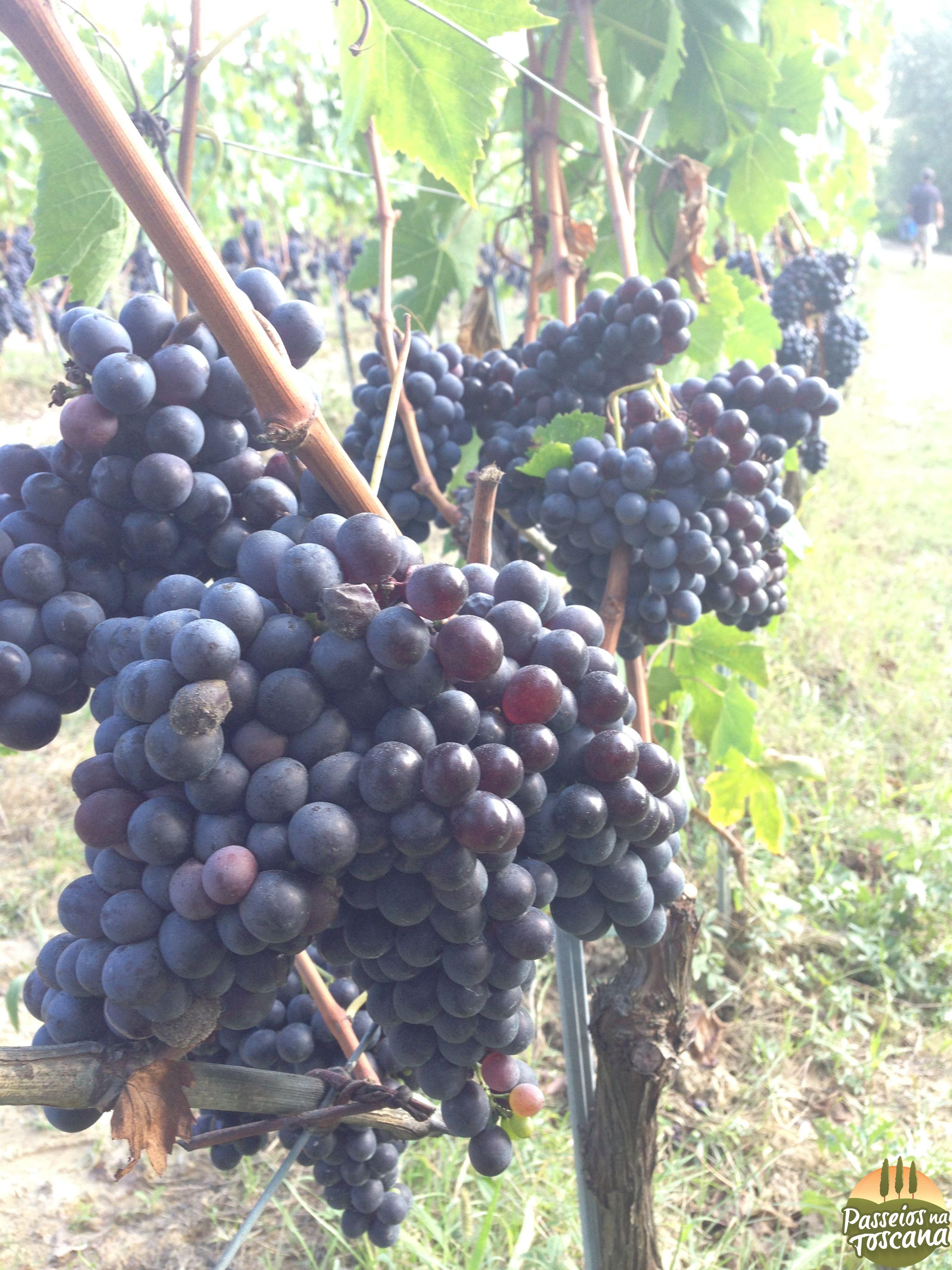 vinho_12