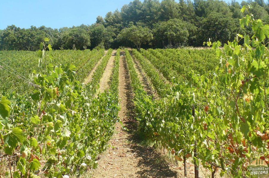 PETRA - SUVERETO - vinicola_16