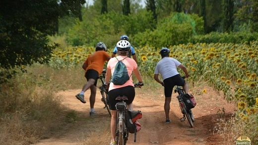 bike tour siena 10 520x293