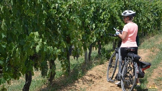 bike tour siena 13 520x293