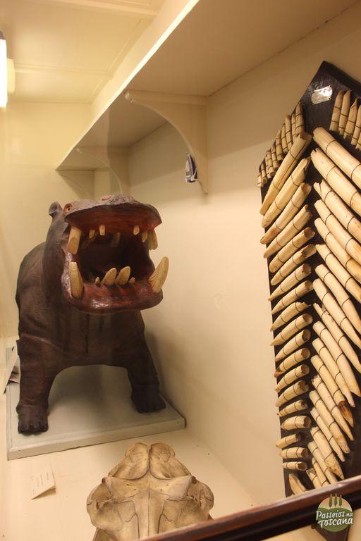 museu la specola