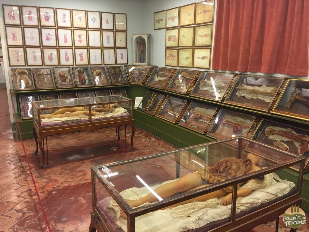 museu-della-specola-florenca_9
